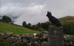 El Camino de Santiago con tu perro guía