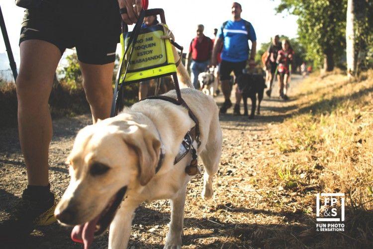 Un perro guía durante el Camino de Santiago.